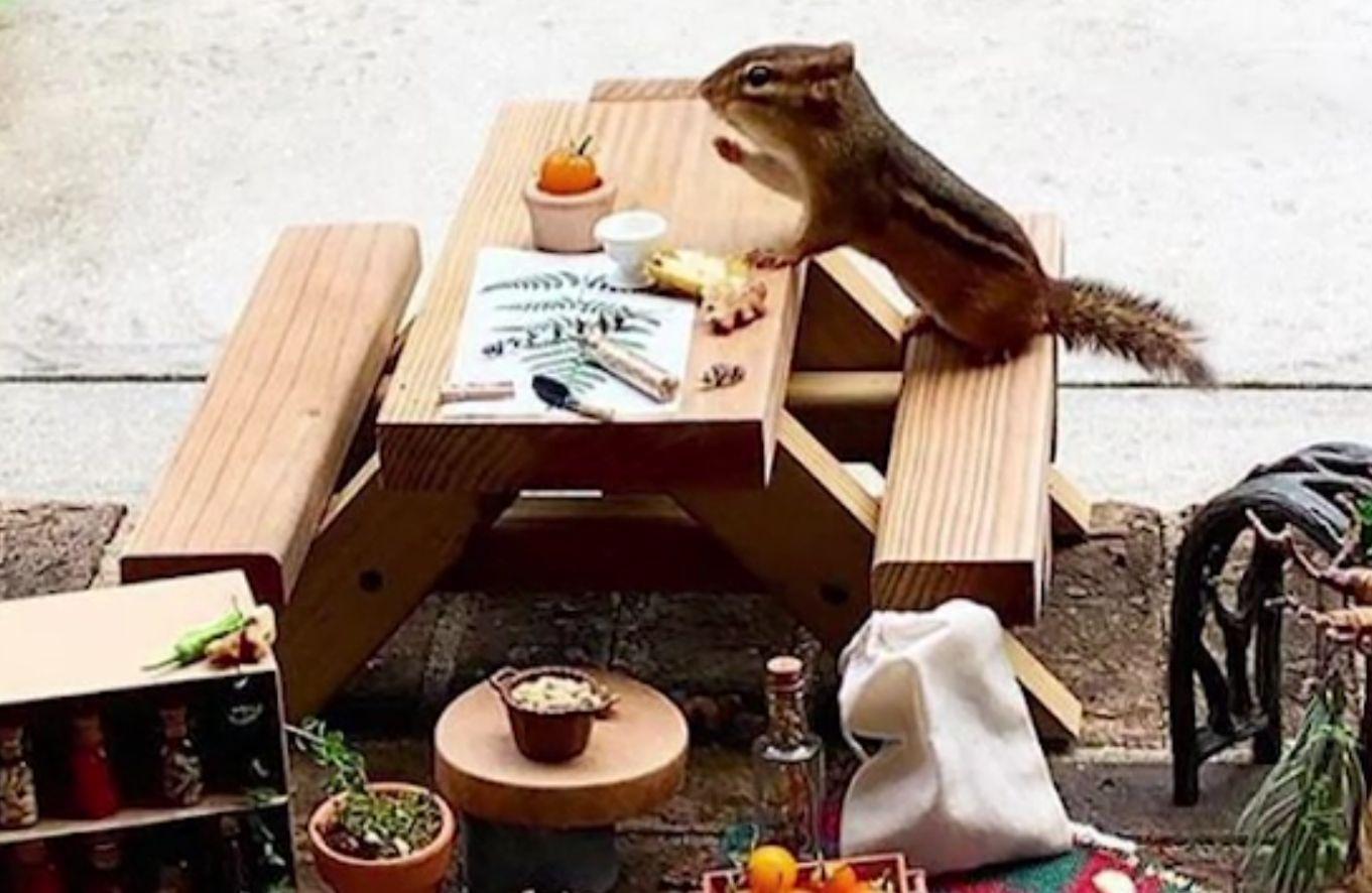 Un american a creat un restaurant pentru o veveriţă. Cum arată localul. VIDEO