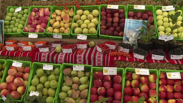 Fructele exotice pe care încep să le cultive tot mai mulți fermieri români. Ce este asimina