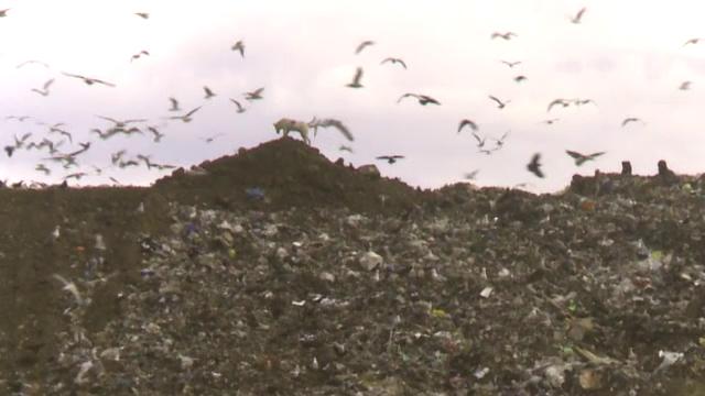 """""""Războiul gunoaielor"""". Cum a ajuns Bucureștiul să fie captiv unei singure gropi de gunoi active"""