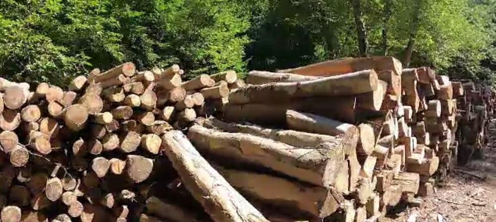 Senatorii vor ca lemnele de foc să fie mai ieftine. Cu cât ar urma să scadă TVA-ul