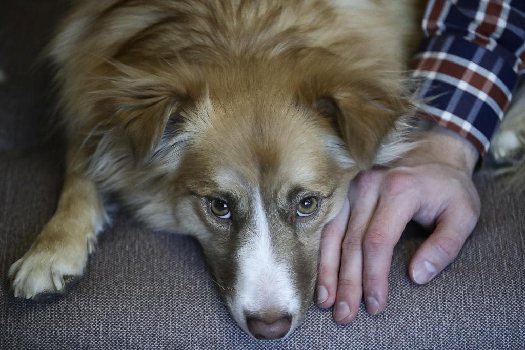 Românii continuă să abandoneze animalele de companie. Doar unul din zece câini de pe stradă e adoptat