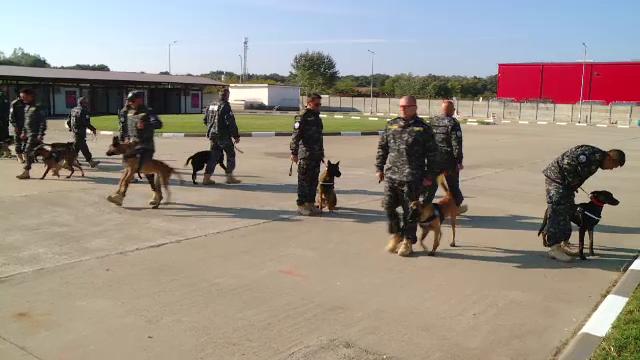 19 câini, ''Agenții speciali'' ai Agenției Naționale de Administrare Fiscală. Pentru ce sunt antrenați