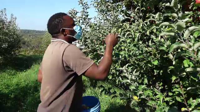 Criză de zilieri în podgoriile și livezile din țară. Fermierii apelează la clienți pentru a culege fructele