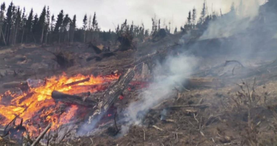 Incendiu puternic într-o pădure din județul Harghita. Pompierii s-au luptat cu flăcările o zi întreagă