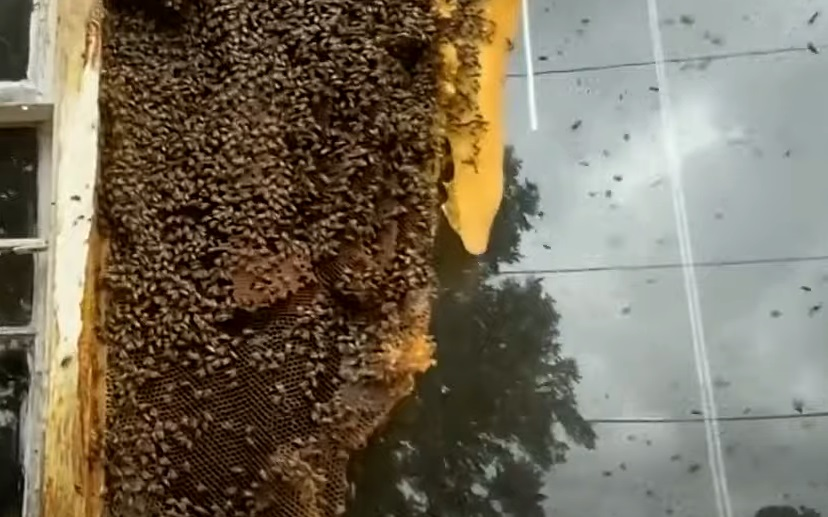"""Vecinii unei case părăsite au fost îngroziți de mii de insecte: """"Uneori mi-e teamă să ies din casă"""