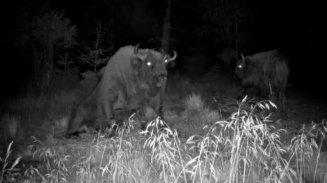 Imaginile cu animale sălbatice din România, admirate de români