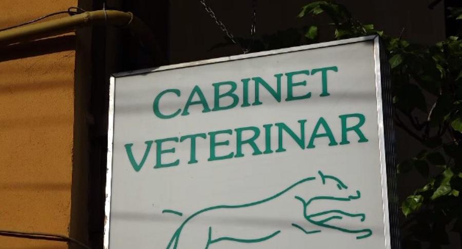 Percheziții la un cabinet veterinar din Bistrița unde ar avea loc intervenții chirurgicale ilegale