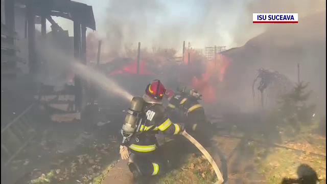 Sute de prepelițe au murit arse într-un incendiu din Suceava