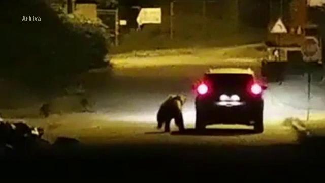 Un bărbat de 50 de ani a fost atacat de urs pe un câmp, în județul Sibiu
