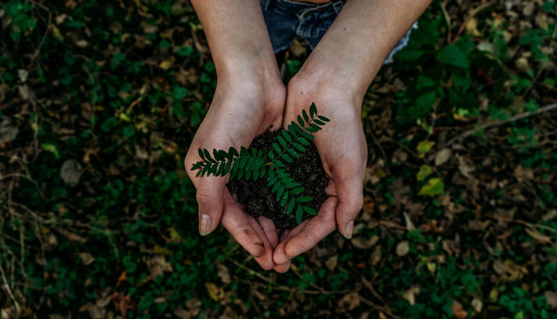 (P) Sustenabilitate - soluția modernă a problemelor moderne