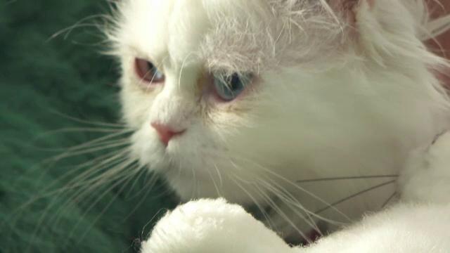"""Adăpost pentru pisicile abandonate, în Zalău. Felinele așteaptă să fie adoptate: """"E ca un rai pentru pisici"""""""