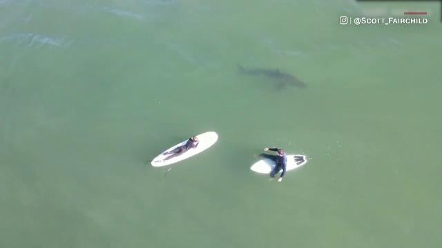Filmare spectaculoasă din dronă în California. Un cameraman a surprins mai mulți rechini printre surferi