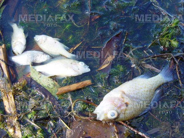 Canicula a ucis zeci de pestisori dintr-un canal de irigatii din judetul Arad
