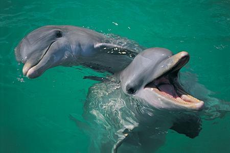 Cei trei delfini de la Constanta, pusi la dieta si fitness. Ce antrenoare e nemultumita de ei