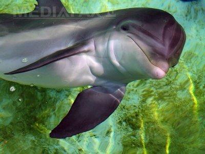 Delfinii militari ucraineni au