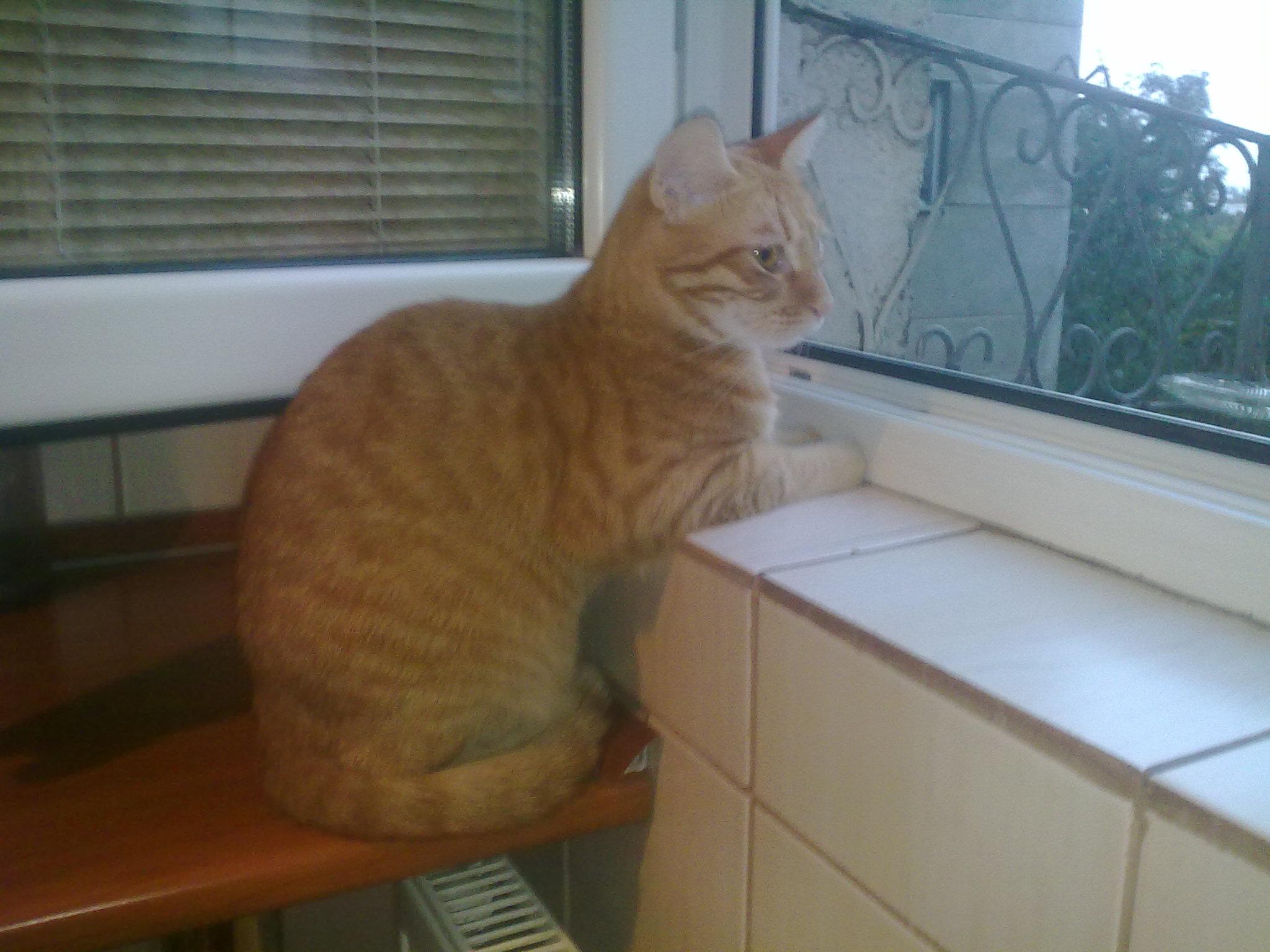 Kitty are nevoie de un nou stapan. Este foarte jucausa si prietenoasa