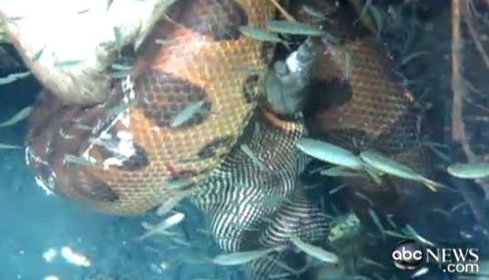 """Imagini inedite cu o luptă între un anaconda și un crocodil: """"Nu-mi venea să cred ce văd"""""""