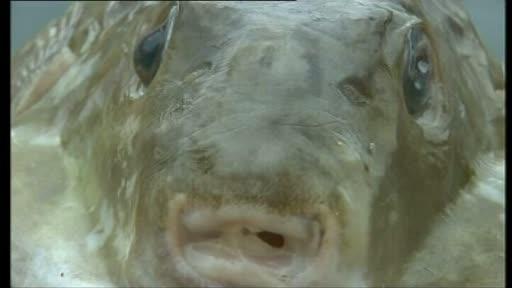 Monstru marin UCIGAS descoperit in Croatia.