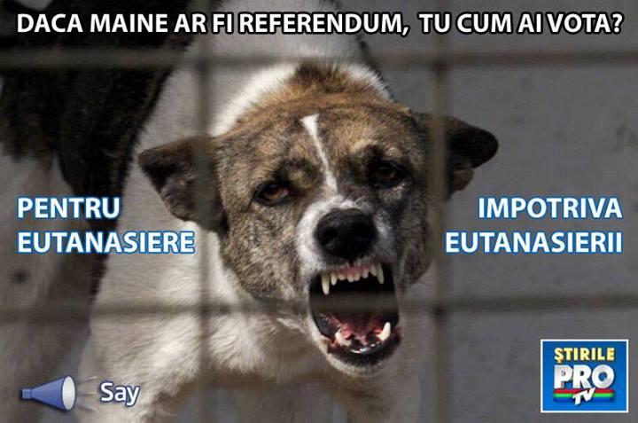 Daca maine ar fi referendum, tu cum ai vota, pentru eutanasiere sau impotriva? Comenteaza aici