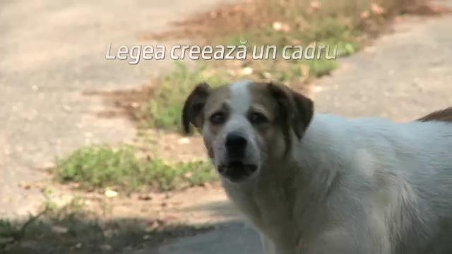 ASPA: De luni se reiau sterilizarile cainilor in adapostul de la Mihailesti, de miercuri, adoptiile