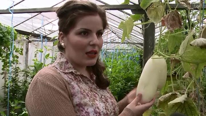 Castravetele alb cu gust de pepene galben. Cum au reusit cercetatorii din Buzau sa dezvolte soiuri noi de legume