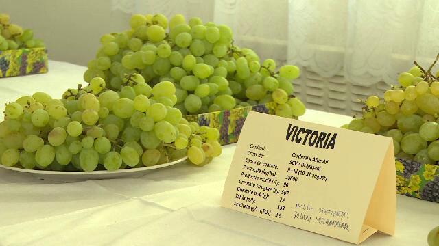 Strugurii de masa, la mare cautare dupa unul dintre cei mai buni ani din viticultura Romaniei. Cu cat se vinde un kilogram