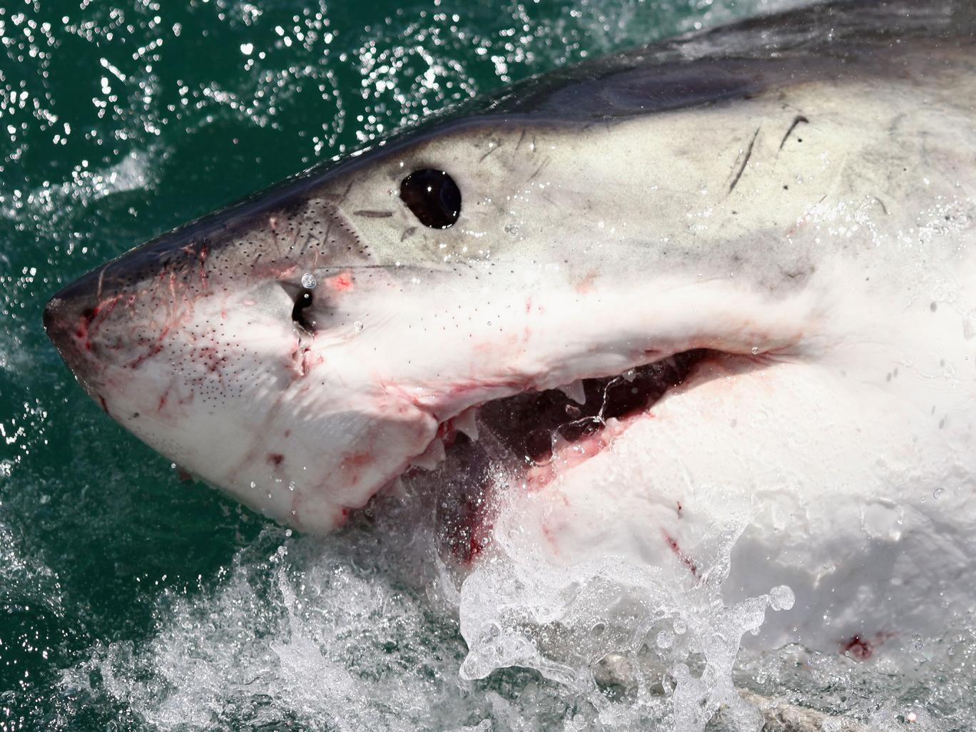 Ghinion teribil pentru un barbat naufragiat in Caraibe. Un rechin l-a atacat chiar in timpul operatiunii de salvare