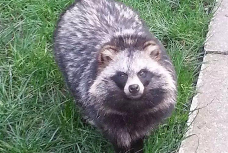 Si-a pierdut catelul in parc, iar stapanul se teme ca patrupedul sa nu fie confundat cu un raton. Cum arata Kekei. FOTO