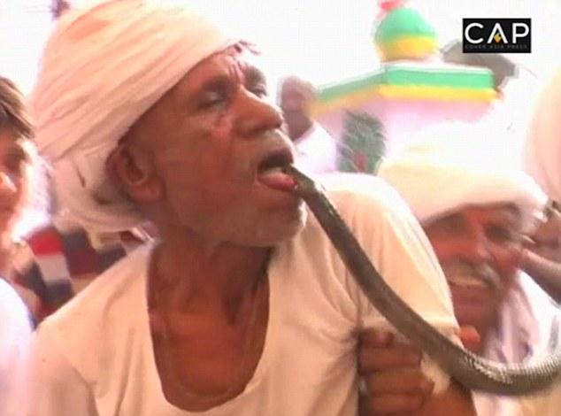 Motivul pentru care un indian se lasa muscat de limba de o cobra veninoasa. Ce se intampla dupa atacul sarpelui
