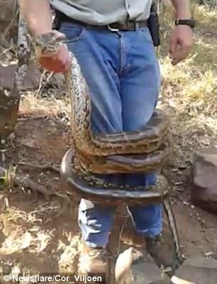 Vânătorul care a ajuns vânat. Un expert în reptile este aproape ucis de un piton. VIDEO