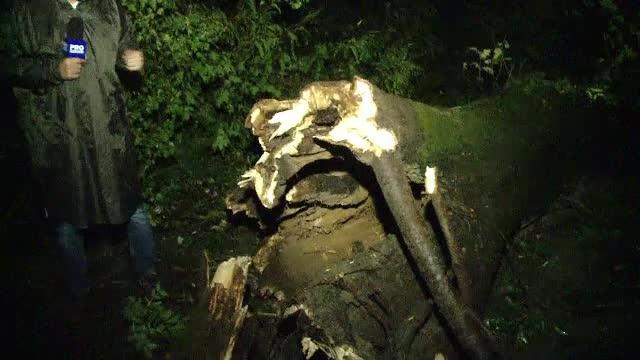 Trei persoane, ucise de un copac care s-a prăbușit peste ele, în Buziaș