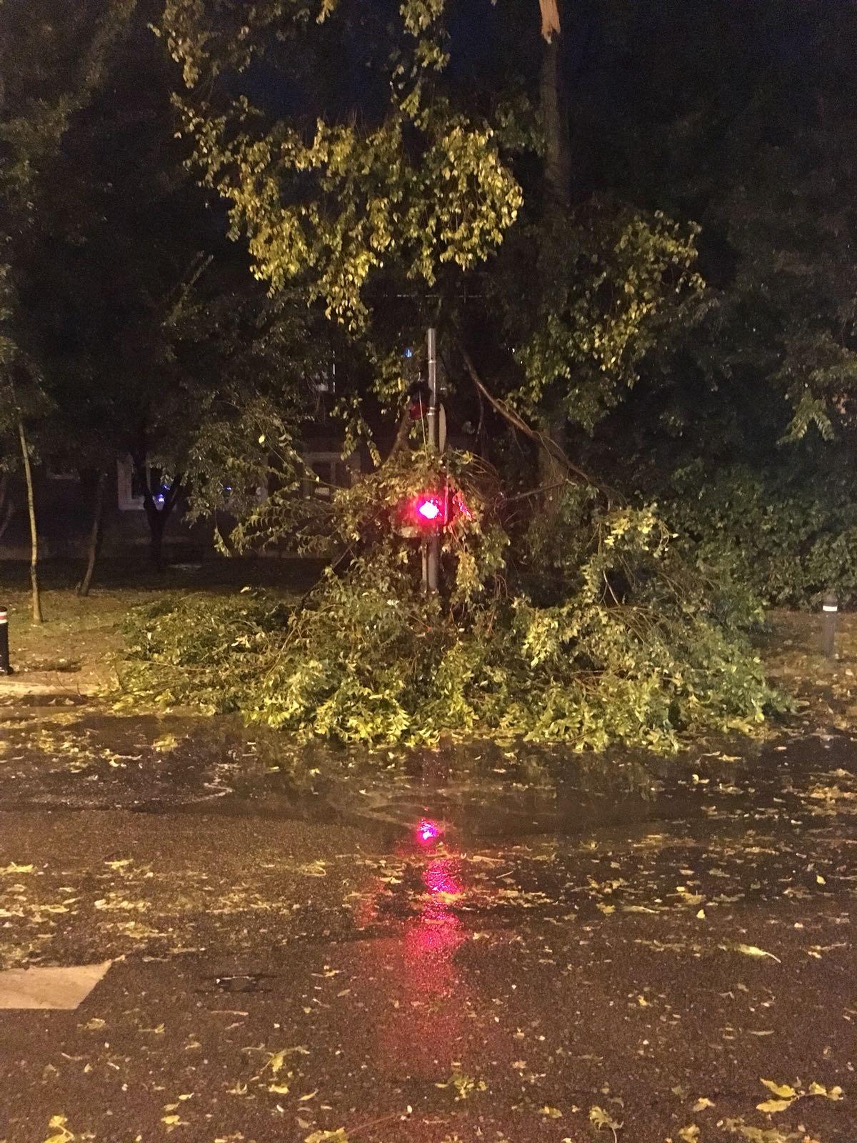 Trafic blocat în București, după ce un copac s-a prăbuşit pe reţeaua de contact a troleibuzelor