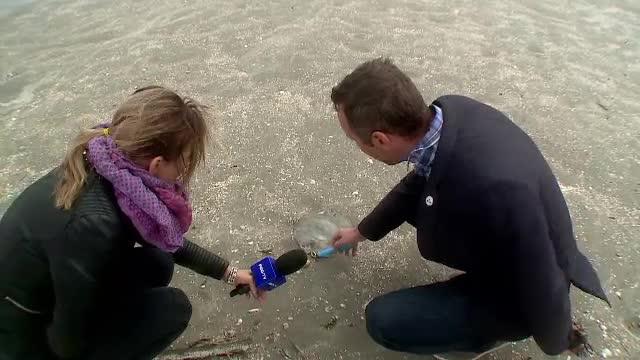 Furtunile din ultimele zile au adus pe plaja din Mamaia sute de creaturi periculoase: