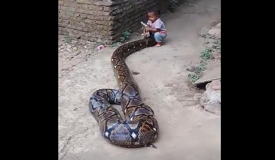 Copil filmat în timp ce se juca cu un piton uriaş. Ce i-a făcut şarpele