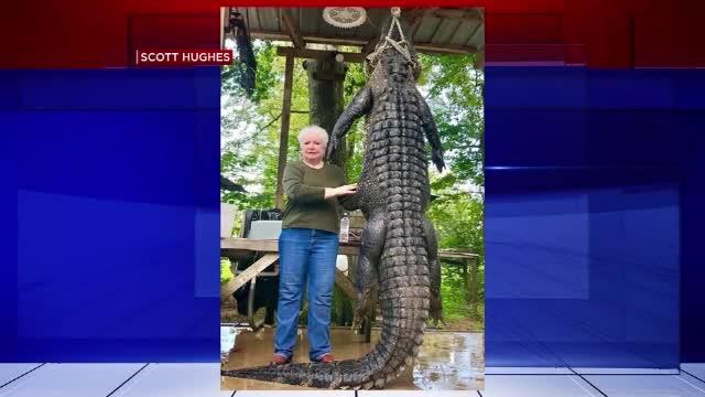 O primăriță sexagenară din statul Texas a vânat un aligator