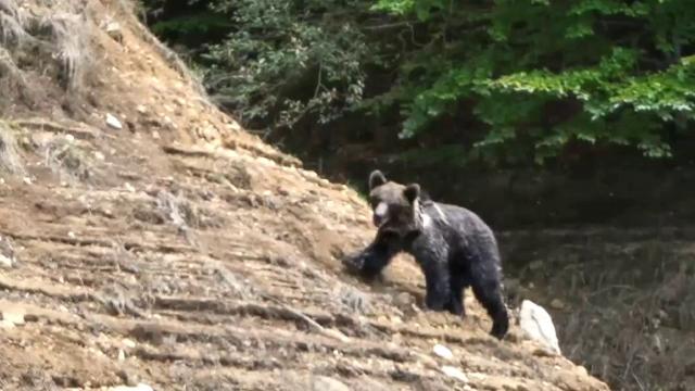 Un tânăr de 32 de ani, pasionat de fotografie, a reuşit să surprindă urşii din zona barajului Vidraru