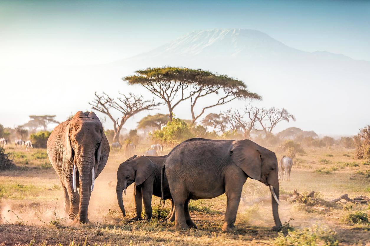 O turistă germană a murit într-un safari, călcată în picioare de un elefant