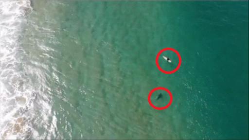 A filmat cu drona cum un rechin se apropie de un surfer. Ce a urmat. VIDEO