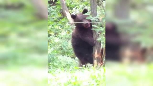 Vânător atacat de urs în Bistrița. Bărbatul, preluat de un echipaj SMURD