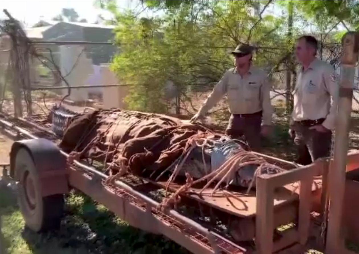 Crocodil cât un jeep, într-un râu din Australia. Ieșise la mal în preajma turiștilor
