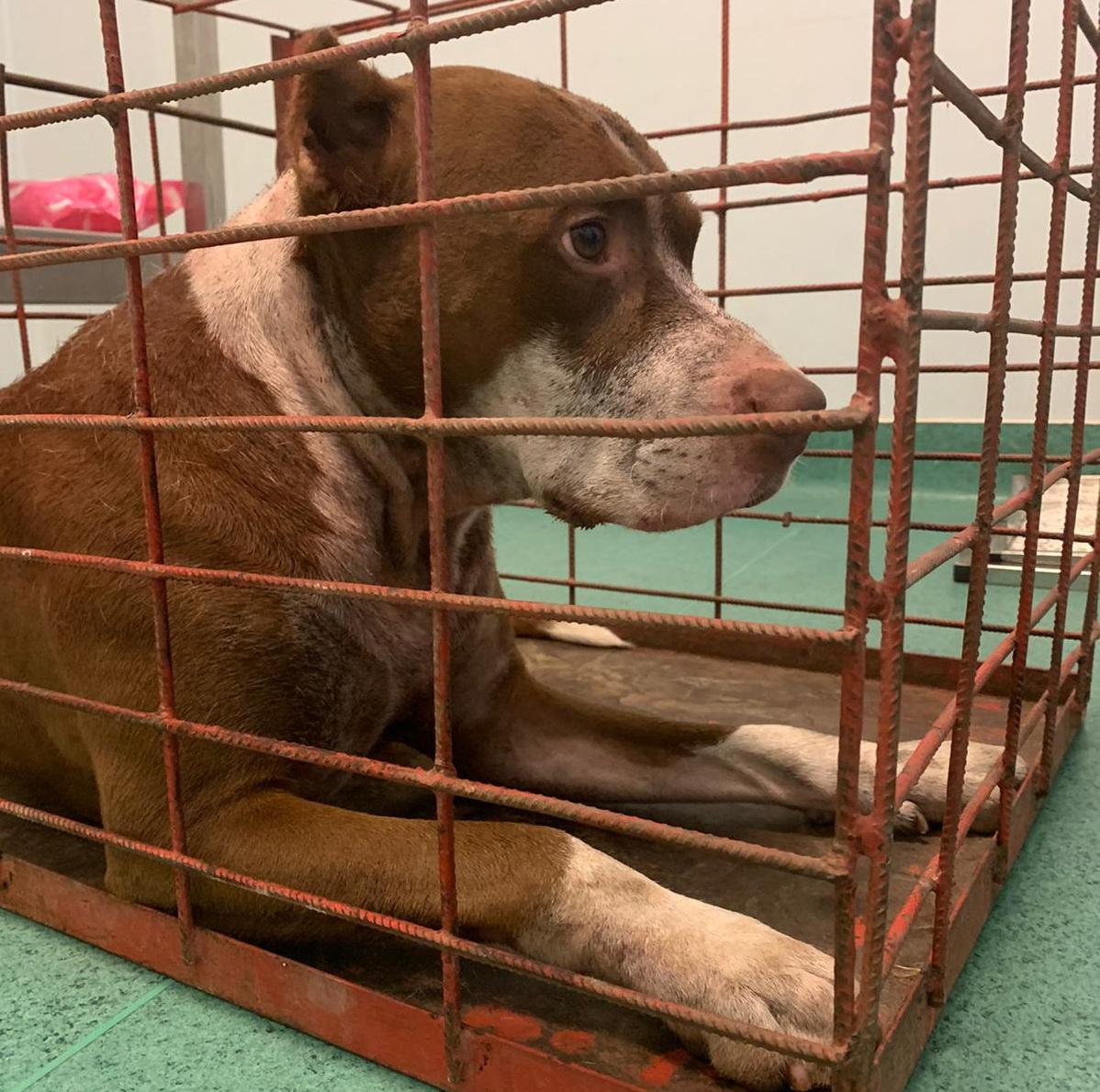 Bărbat din Adjud, transportat în stare gravă la spital după ce a fost atacat de doi câini Amstaff în propria curte