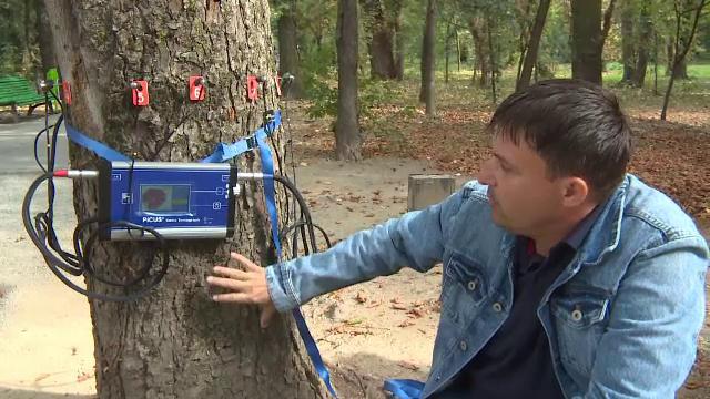 Copacii pot fi salvați cu un tomograf special. Cum funcționează aparatul, folosit şi în România
