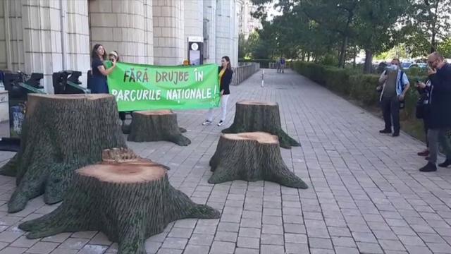 Protest cu drujbe la Ministerul Mediului: Copacii trebuie lăsăți să crească și să moară în treaba lor