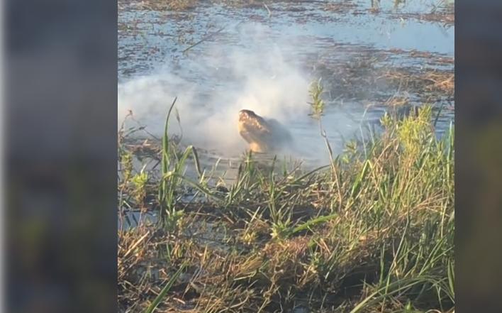"""VIDEO Un aligator s-a transformat în """"dragon"""" după ce a mușcat o dronă care se afla în zbor"""