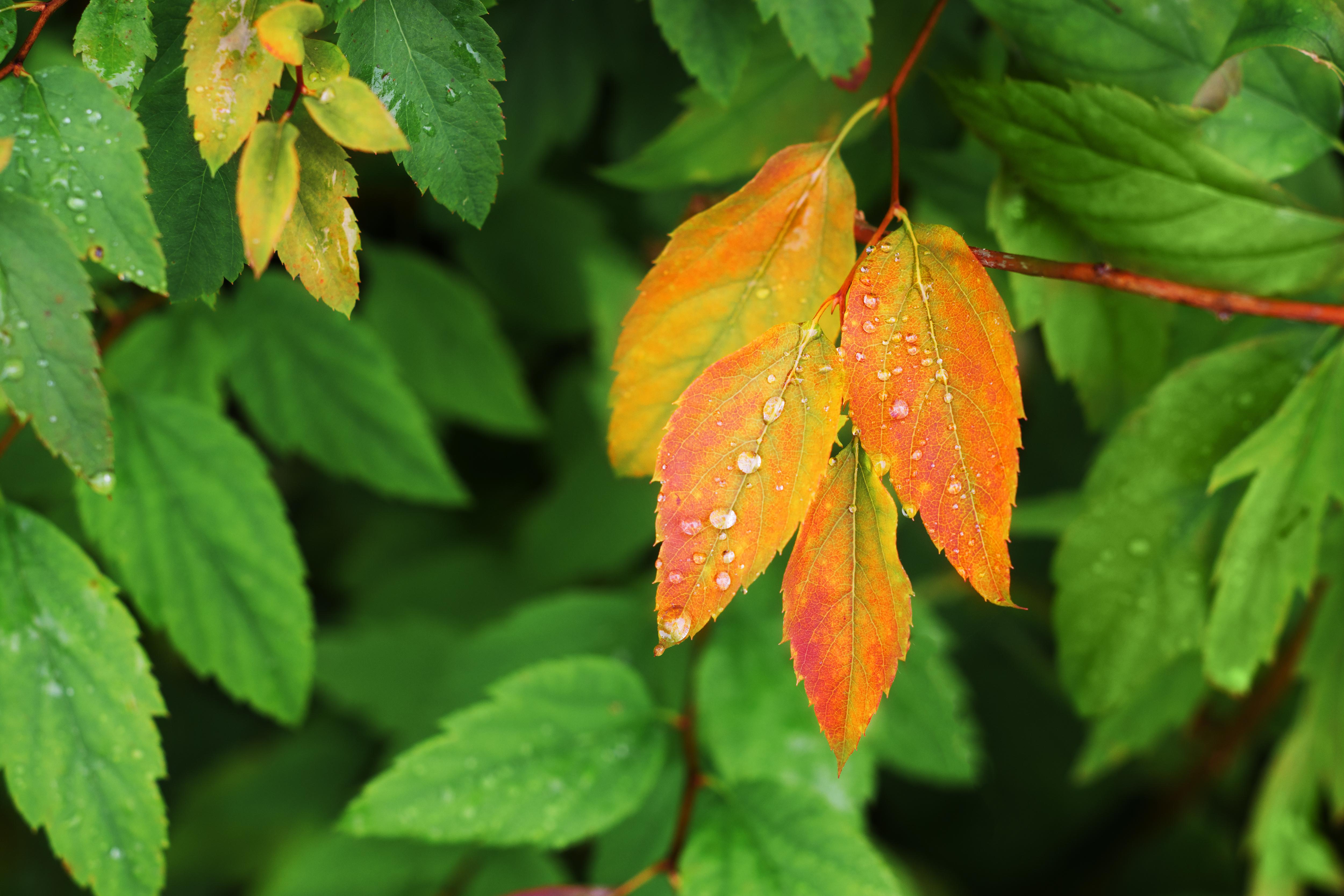 Vremea azi, 10 septembrie. Puțină toamnă dimineața și apoi se încălzește
