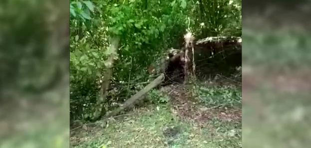 Un urs a fost găsit împușcat și tranșat sub un pod din Neamț. Poliția a deschis o anchetă