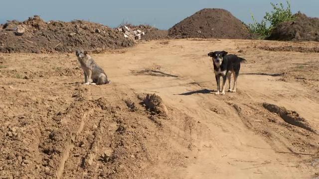 Locuitorii unei comune din Cluj sunt terorizați de câinii lăsați nesupravegheați