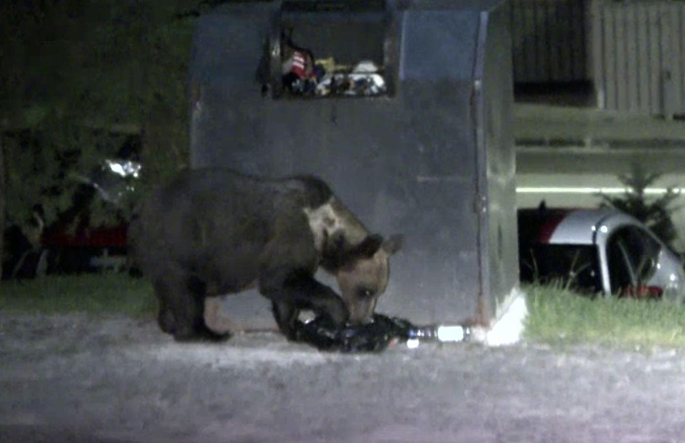 """""""Turismul RO-Alert"""" funcționează la Tușnad. Oamenii plătesc să vadă urșii gunoieri"""