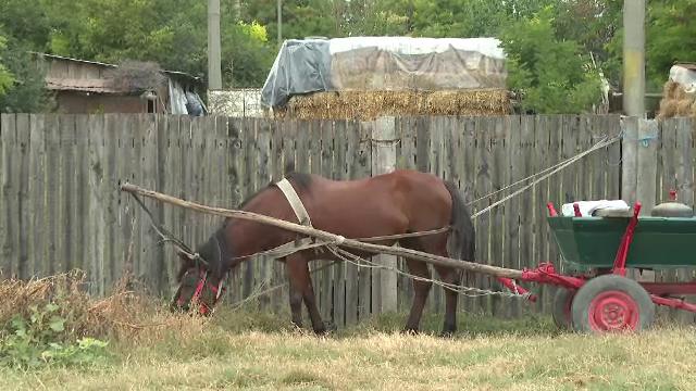 Un căruțaș, condamnat pentru ucidere din culpă. Din cauza neatenției sale, un bărbat și-a pierdut viața