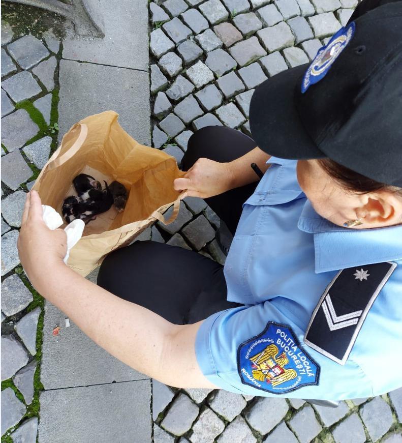 Un bărbat care a abandonat cinci pui de pisică pe o stradă din Capitală a fost amendat cu 3.000 de lei